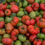 Sbírejte i zelená rajčata
