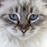 Kočička nebo pejsek? Aneb pořizujeme čtyřnohého kamaráda